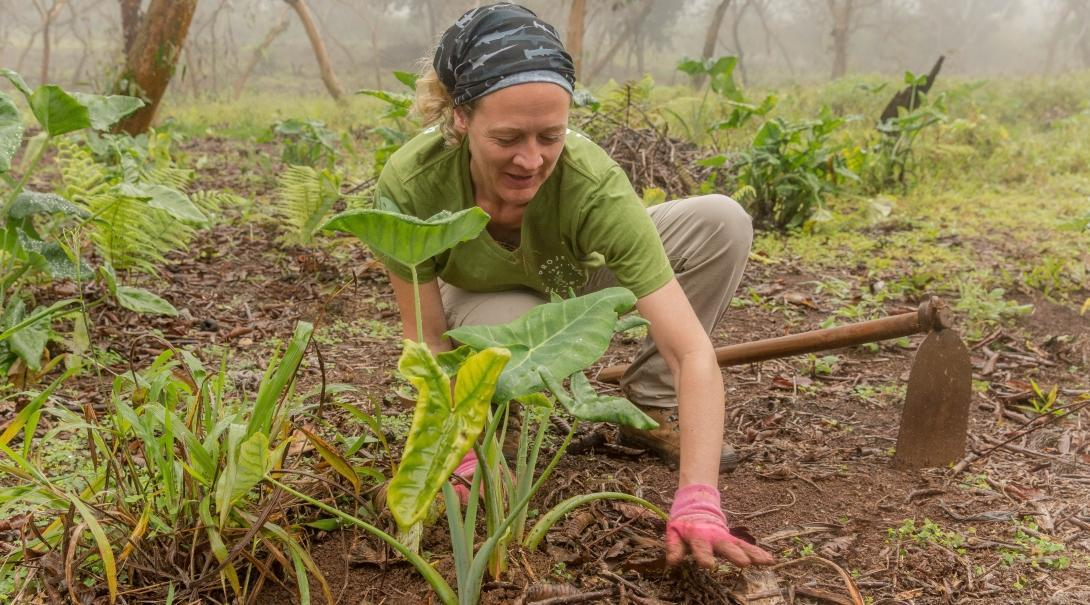 Pictured is a female volunteer from Projects Abroad tending to the plants in the highlands as part of her conservation volunteering in the Galapagos Islands.